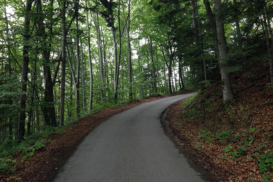 Chełm od Chomranic - W górę przez las